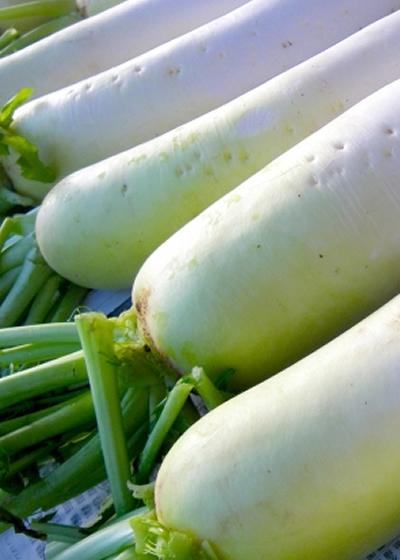 旬の3大ブランド野菜を使った料理をご提供!