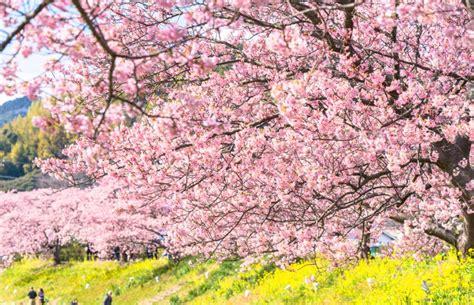 春爛漫!お花めぐり無料バスツアー