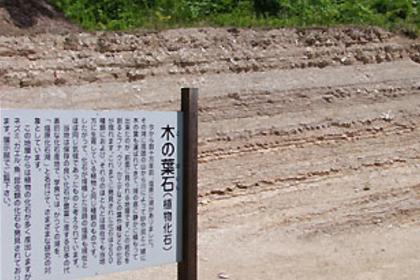 「木の葉化石園」へ無料送迎